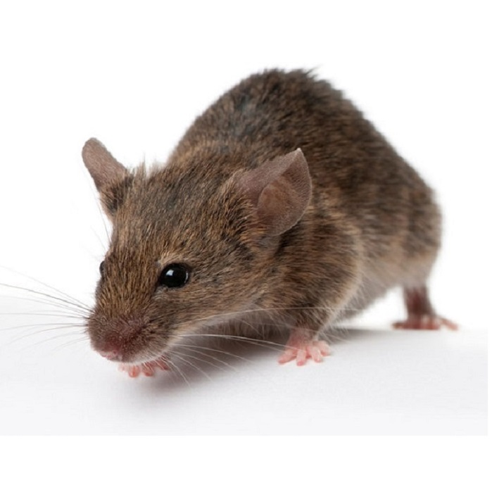 Дератизация от мышей ПроКомфорт